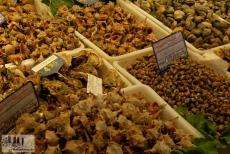 Alle Arten von Muscheln