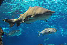 Tickets for school classes for the Aquàrium in Barcelona