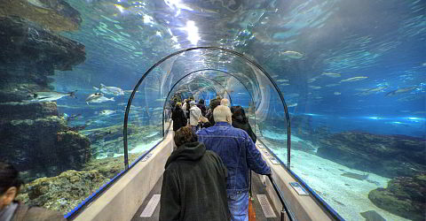 transparent tunnel - aquarium - barcelona