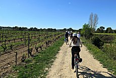 Cycling in the Vineyards of Penedès