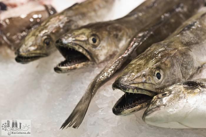 Frischen Fisch