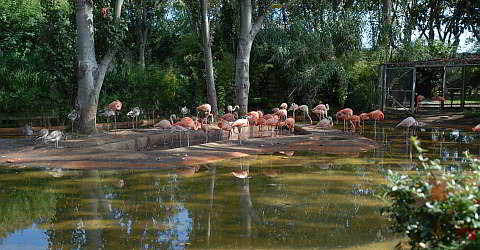 Zoo Barcelona tickets for the barcelona zoo with an discount
